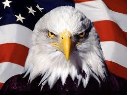 Freedom - eagle